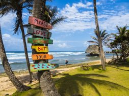 Caribbean, Barbados, Saint Joseph, Signs on palm at Bathsheba Park